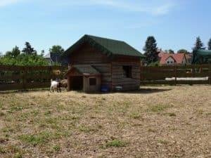 Ferienwohnung Dresden Lockwitz - Ziegen